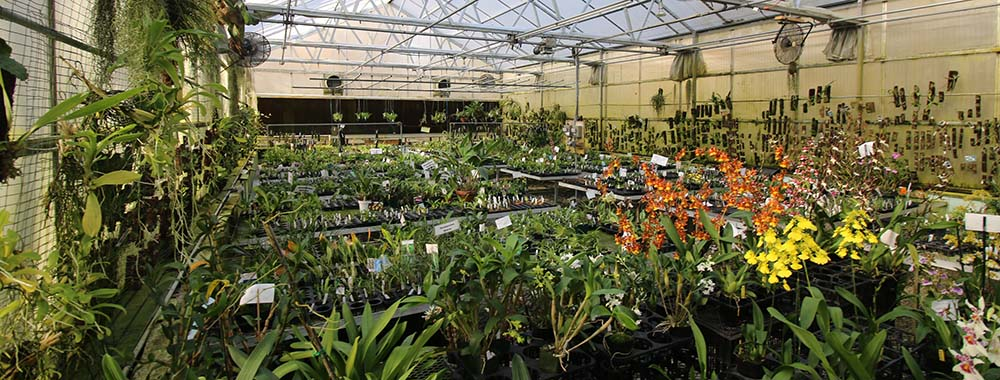 green-house-panorama.jpg